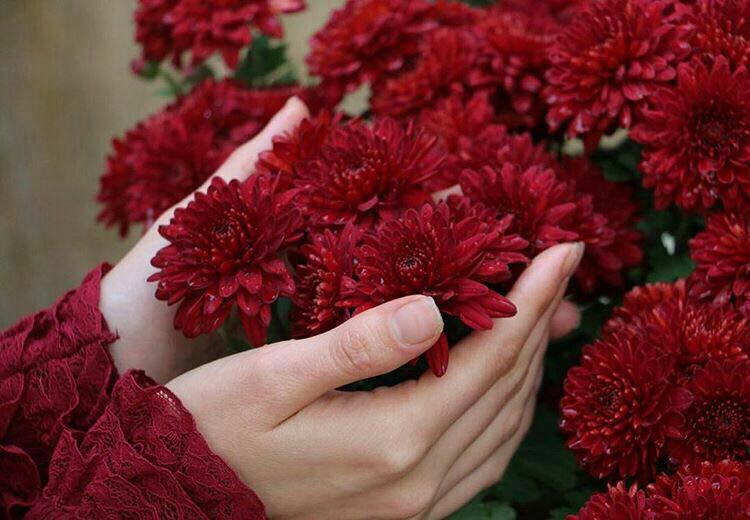Image result for عکس گل های عاشقانه